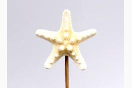 Blompinne sjöstjärna